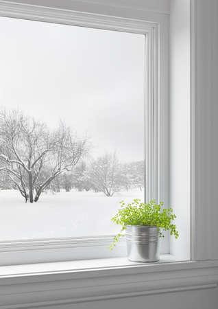 창을 통해 본 겨울 풍경 창턱에 녹색 식물,