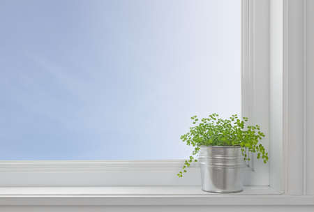 window: Green plant on a window sill, in a modern home, with blue sky seen through the window  Stock Photo