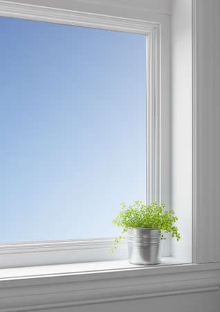 Green plant on a windowsill, with blue sky seen through the big clean window