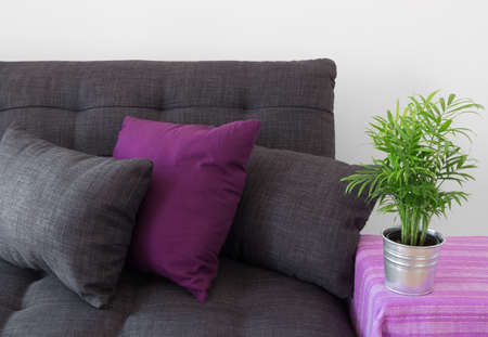 Cozy sofa decorated with cushions, and green plant in metal pot Stock Photo - 19862991