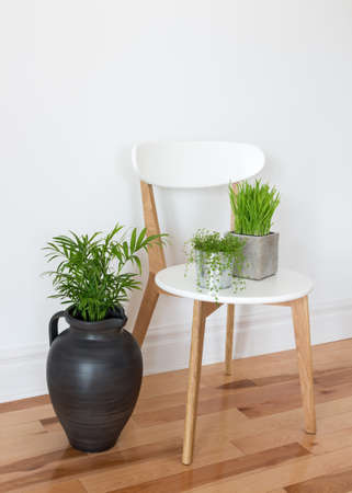 Elegant modern chair with green plants in a room  Stock Photo - 19862981