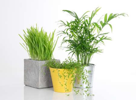 Three beautiful bright plants in pots, on white background