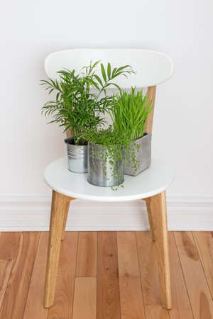 houseplant: Elegant white chair with green plants decorating a room  Stock Photo