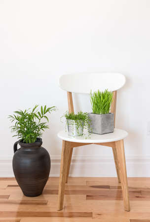 White wooden chair with green plants 스톡 콘텐츠