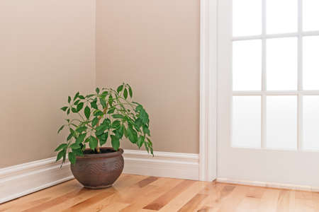 Green plant in a clay pot decorating the corner of a room with a glass door.