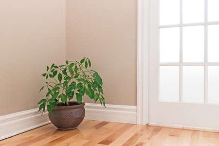 유리 문 방 모서리를 장식 점토 냄비에 녹색 식물.