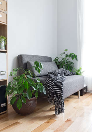 indoors: Living room with comfortable armchair, bookcase and green plants. Stock Photo