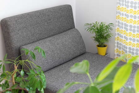 Gray chaise longue and lots of green plants in the living room. Stock Photo - 20433450