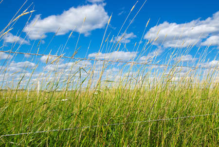 Green field on a farm, under the blue sky with clouds Stock Photo - 22529641