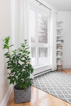 창 밖에 평화로운 겨울 풍경이있는 방에있는 레몬 트리.