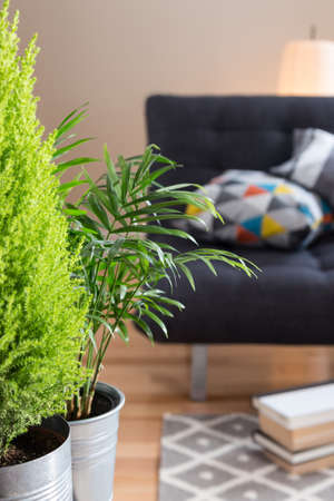 Green plants in the living room, with sofa, lamp and books in the background.