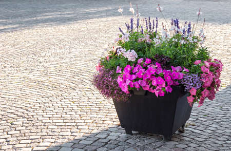 Flowers decorating a city square in sunlight