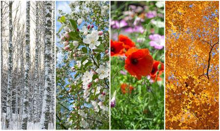 冬、春、夏、秋四季の自然