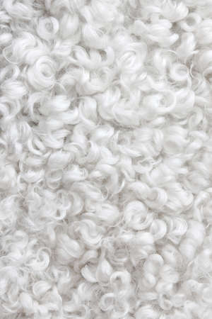 Close-up of white curly sheepskin  Abstract background  Stock Photo