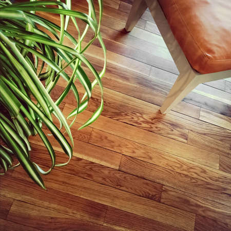 Chair and green plant on wooden floor. 免版税图像
