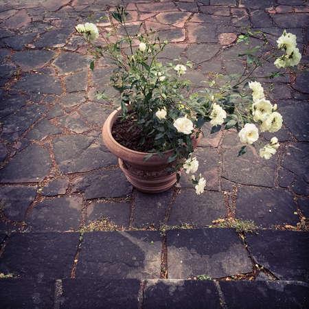 Ceramic pot with white roses, retro style.