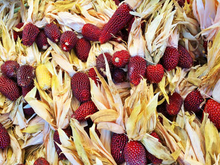 Variety of Peruvian colored corn. Autumn market. Imagens