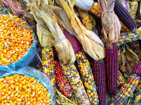 Variety of colorful corn. Autumn market.