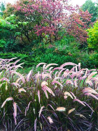 Kleurrijke tuin met siergras. Begin van de herfst.