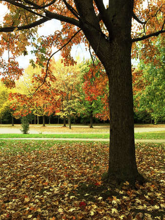 Ahornbaum im Herbst Park. Quebec, Kanada. Standard-Bild - 45795291