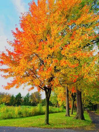 公園で明るい秋の木々。ケベック州、カナダ。 写真素材 - 45798247