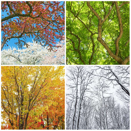 4 つの季節。春、夏、秋、冬の木。4 つの写真のコラージュ。