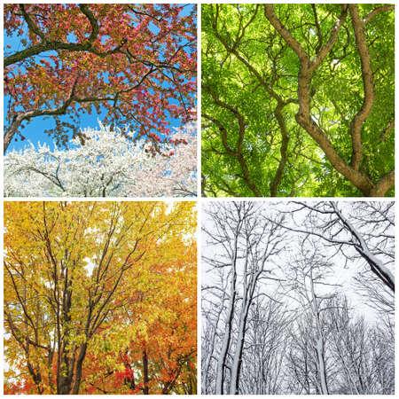 Quatre saisons. Arbres au printemps, été, automne et hiver. Collage de 4 photos. Banque d'images - 46998380