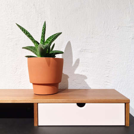 Detail of modern interior with sansevieria plant in a clay pot.
