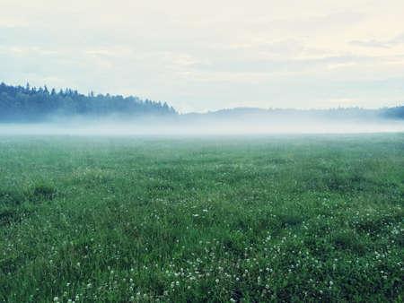 Dreamy green meadow with wild clover. Scandinavian nature.