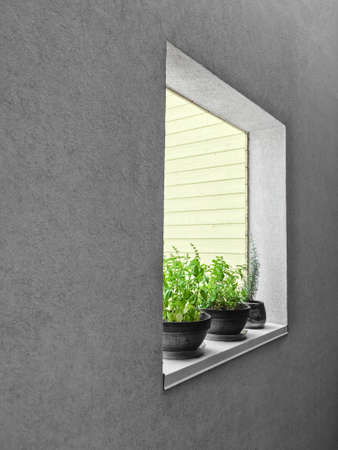 Potted herbs on a window sill. Detail of an urban residential building. 版權商用圖片 - 78406784