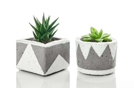 Two succulent plants in handmade concrete planters with white ornament, isolated on white background.