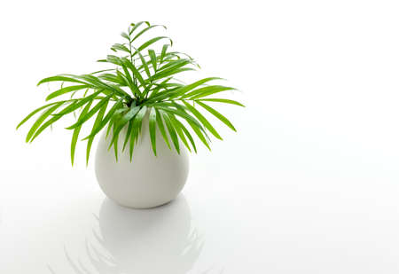 Green palm leaves in a white ceramic vase, on white background, with reflection. Foto de archivo