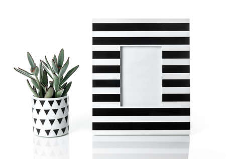 Panda plant and black and white striped picture frame. Stylish home decor.