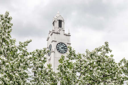 White clock tower behind blooming spring trees. Old Port of Montreal (Quebec, Canada).