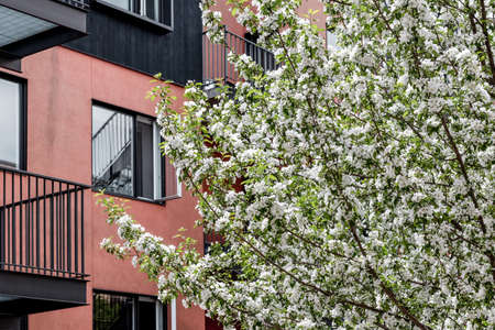 Beautiful blooming tree in front of a modern pink and black building. Spring in the city.