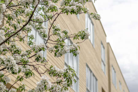 Blooming tree and facade of a modern residential building with big windows. Spring in the city. Standard-Bild