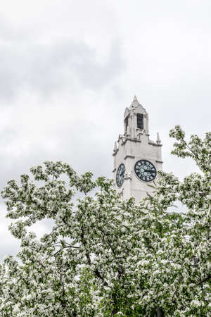 White clock tower behind blooming apple trees. Spring in the Old Port of Montreal (Quebec, Canada).