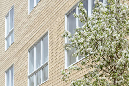 Big windows of a modern residential building and blooming tree. Spring in the city.