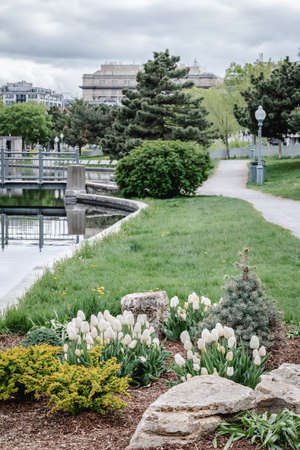 Spring park with white tulips in the Old Port of Montreal (Quebec, Canada).