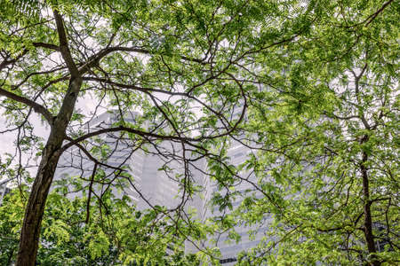 Modern office buildings seen through green leaves. Spring in the downtown of Montreal (Quebec, Canada). Standard-Bild - 148689973