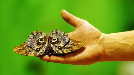 Big beautiful butterfly sitting on the hand of man