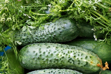 Ripe green cucumbers lie on a plate among parsley and dill. Stock Photo
