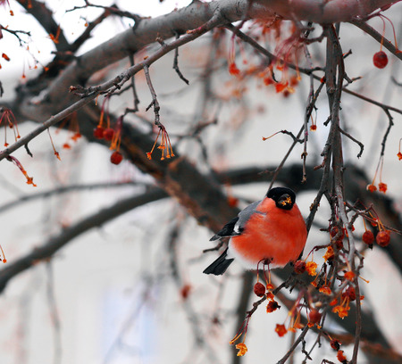 Bright colored bird Finch sitting on a tree branch. Stock Photo