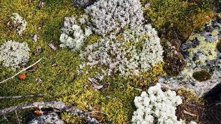 Moss ist eine starke und vielf�ltige Gruppe von Pflanzen wachsen in feuchten Stellen. Lizenzfreie Bilder