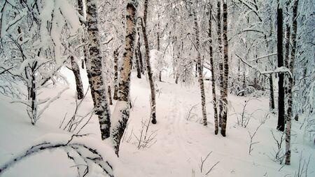 Die B�ume mit Schnee im Winter Wald bedeckt. Lizenzfreie Bilder