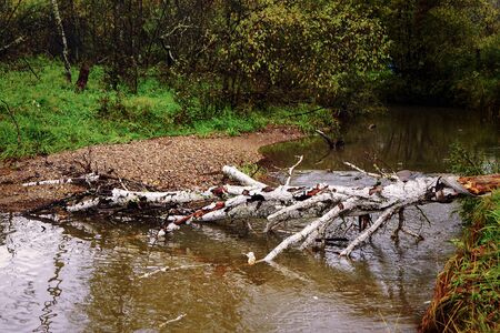 A fallen birch is used as the crossing of the river. Stock Photo