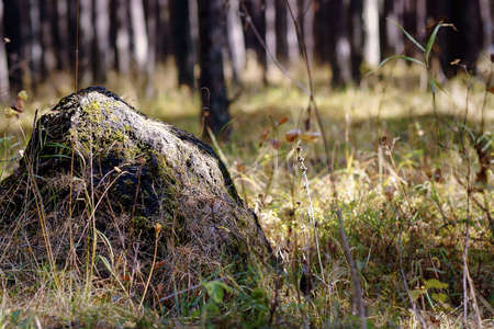 The boulder is covered with moss in the forest in a clearing.