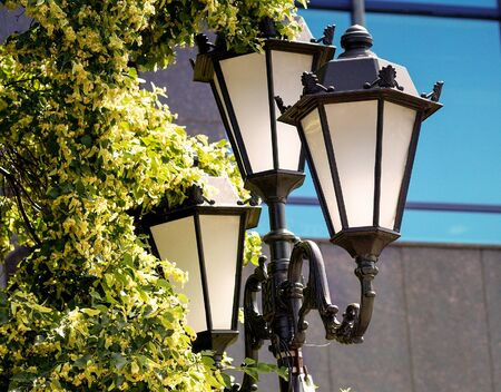 Street lamp in the Park, among the trees, lindens.