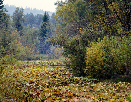 In the floodplain of the river flowing in the mountains, overgrown with weeds.