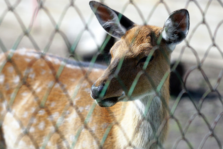 A young deer is in the aviary of the zoo. Stock Photo